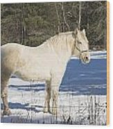 White Horse In Winter Maine Wood Print