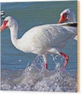 White Ibis On The Shore Wood Print