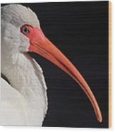 White Ibis Portrait Wood Print