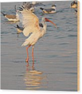 White Ibis With Wings Raised Wood Print