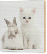 White Kitten And Baby Rabbit Wood Print