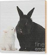 White Kitten And Black Rabbit Wood Print