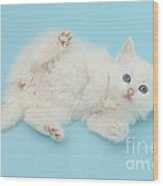 White Kitten Wood Print