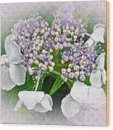White Lace Cap Hydrangea Blossoms Wood Print