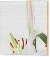 White Lillys And Background Wood Print