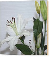 White Lily With Buds Wood Print