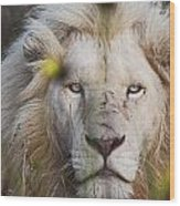 White Lion And Yellow Flowers Wood Print