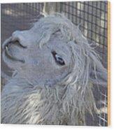 White Llama Wood Print