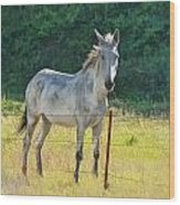 White Mule No.5007 Wood Print