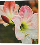 White N Pink Wood Print