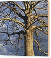 White Oak And Storm Clouds Wood Print by Thomas R Fletcher