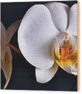 White Orchid Wood Print by Dorothy Walker
