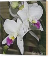 White Orchid Of Taiwan Wood Print