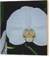 White Orchids 006 Wood Print