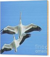 White Pelicans In Flight Wood Print