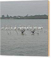 White Pelicans Rule Wood Print