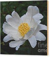 White Peony Flowers Series 4 Wood Print