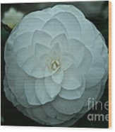 White Perfection Wood Print