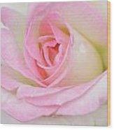 White-pink Rose Wood Print