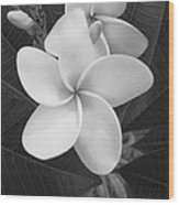 White Plumeria Bw Wood Print