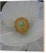 White Poppy Two Wood Print