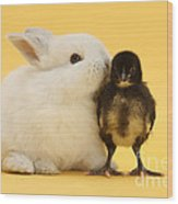 White Rabbit And Bantam Chick On Yellow Wood Print