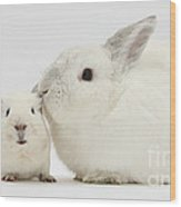 White Rabbit And White Guinea Pig Wood Print
