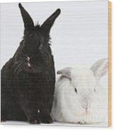 White Rabbit With Black Rabbit Wood Print