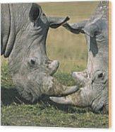 White Rhinoceros Ceratotherium Simum Wood Print
