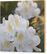 White Rhododendron Bloom Wood Print