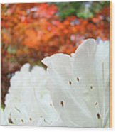 White Rhododendron Flowers Autumn Floral Prints Wood Print by Baslee Troutman