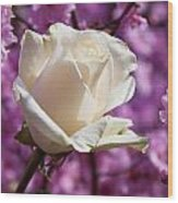 White Rose And Plum Blossoms Wood Print