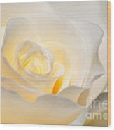 White Rose Blooming Wood Print