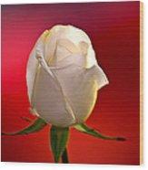 White Rose Red And Black Bg Wood Print