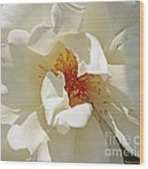 White Rose Stemens Wood Print