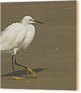 White Seabird Walking Wood Print