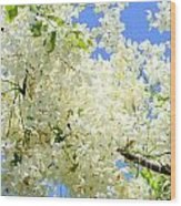 White Shower Tree Wood Print