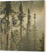 White Spruce In Mist At Sunrise Wood Print