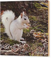 White Squirrel With Peanut Wood Print
