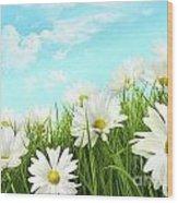 White Summer Daisies In Tall Grass Wood Print