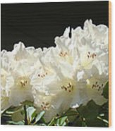 White Sunlit Floral Art Prints Rhododendron Flowers Wood Print