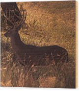 White Tail Buck Wood Print by Kelly Rader