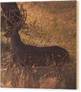 White Tail Buck Wood Print