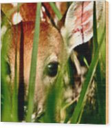 White Tailed Deer Fawn Hiding In Grass Wood Print
