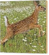 White Tailed Deer Fawn In Field Of Wood Print