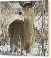 White-tailed Deer In A Snow-covered Wood Print