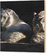 White Tiger And Lion Wood Print