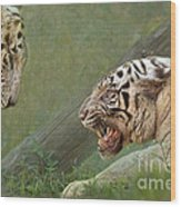 White Tiger Growling At Her Mate Wood Print
