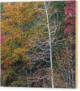 White Tree Fall Colors  Wood Print