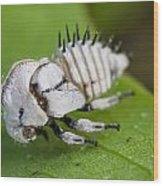 White Treehopper Nymph Wood Print